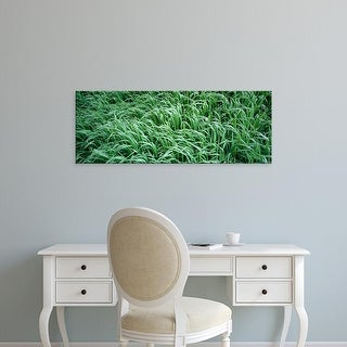 Easy Art Prints Panoramic Images's 'High angle view of grass, Montana, USA' Premium Canvas Art