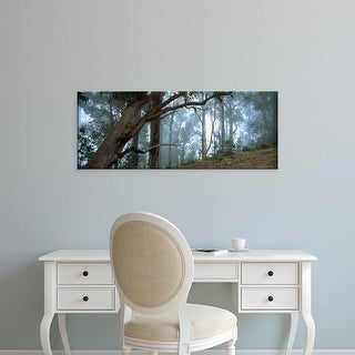 Easy Art Prints Panoramic Images's 'Trees in a forest, Rabacal, Madeira, Portugal' Premium Canvas Art