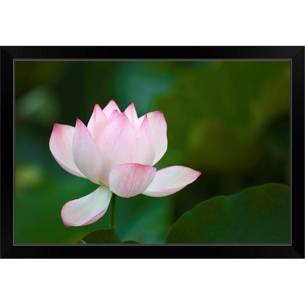 """Close-up of a pink water lily"" Black Framed Print"