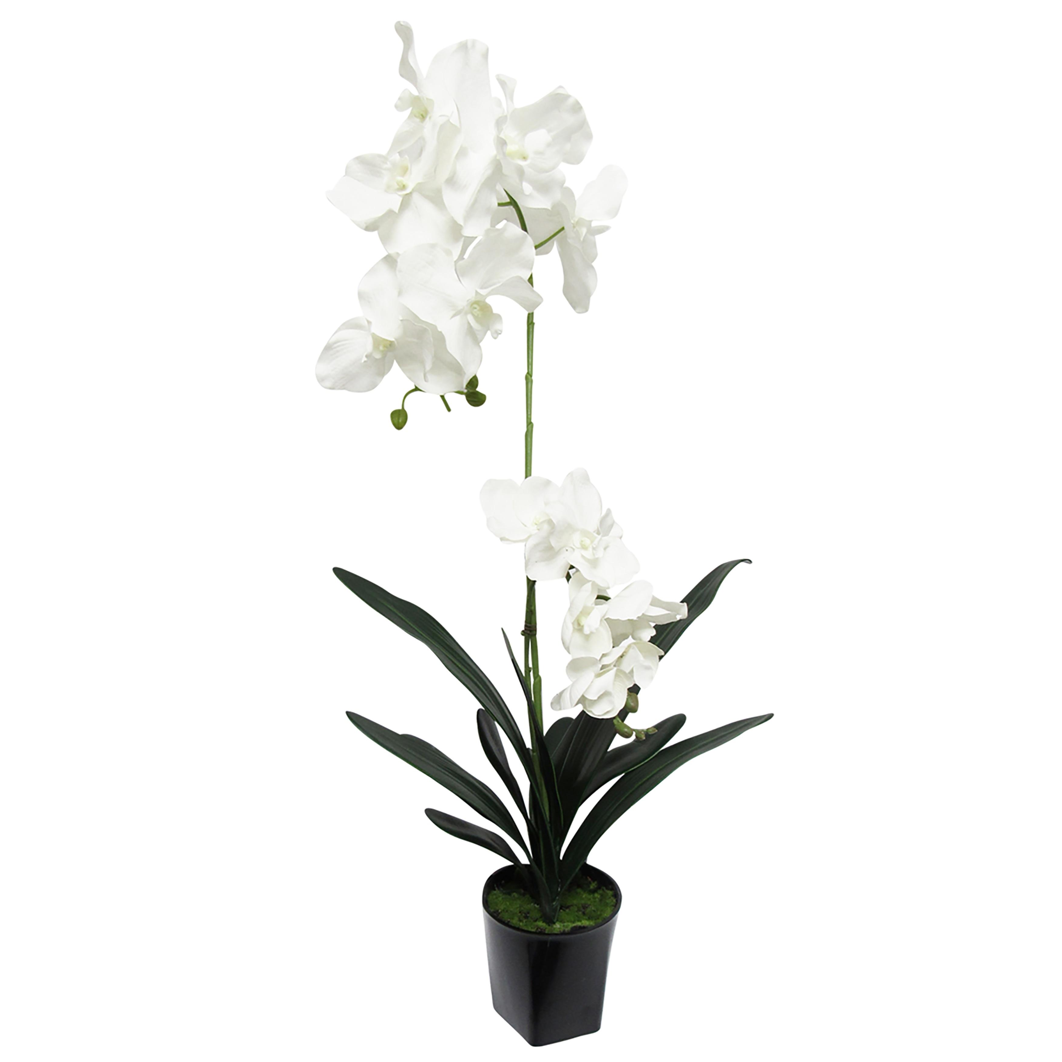 Vanda Orchid Flower Arrangement In Pot 31in Overstock 32022843 31 H X 15 W X 14 Dp White