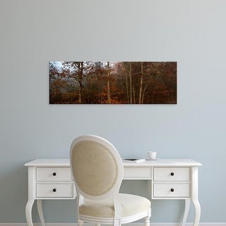 Easy Art Prints Panoramic Images's 'Trees in autumn, Ohio, USA' Premium Canvas Art