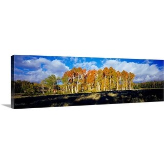 """""""Aspen trees in autumn, Dixie National Forest, Utah"""" Canvas Wall Art"""