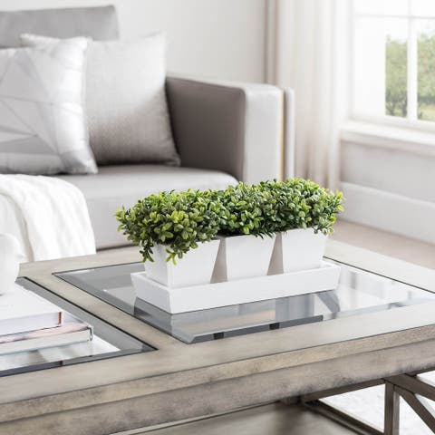 Set of 3 Mini Boxwoods With Tray