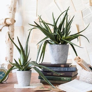 G Home Collection Rustic Artificial Aloe Vera Potted Plant (2 options available)