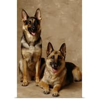 Poster Print entitled 2 German Shepherds, one sitting and one lying down