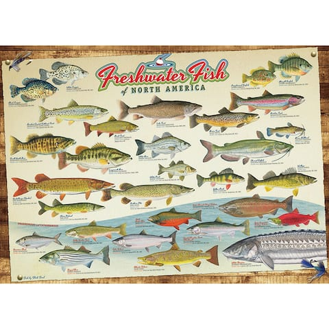 Outset Media Freshwater Fish of North America 1000 Piece Jigsaw Puzzle - Multicolor
