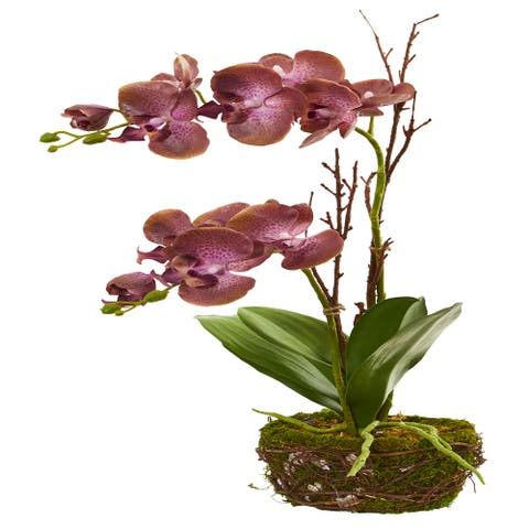 """23"""" Chocolate Phalaenopsis Orchid Artificial Arrangement in Twig Basket - Height: 20 In."""