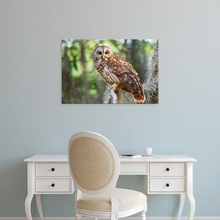 Easy Art Prints Larry Ditto's 'Barred Owl' Premium Canvas Art