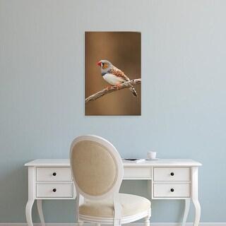 Easy Art Prints Adam Jones's 'Zebra Finch' Premium Canvas Art