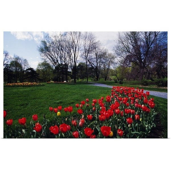 """""""Tulip flower bed blooming in park, New York"""" Poster Print"""