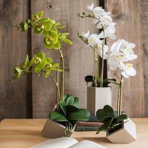 RusticReach Real Touch Orchid Plant in Green and White