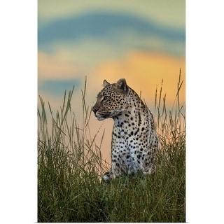 """Leopard, Serengeti National Park, Tanzania"" Poster Print"