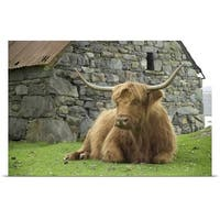 Poster Print entitled Highland cow at rest, in front of a stone building