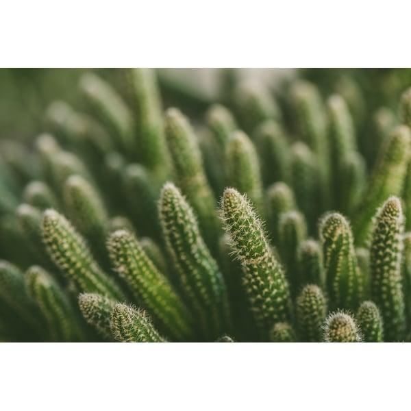 Green Cactus Plants Photograph Art Print