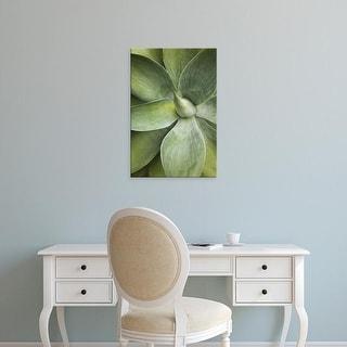 Easy Art Prints Adam Jones's 'Agave Cactus' Premium Canvas Art