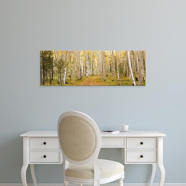 Easy Art Prints Panoramic Images's 'Aspen trees in a forest, Dixie National Forest, Utah, USA' Premium Canvas Art
