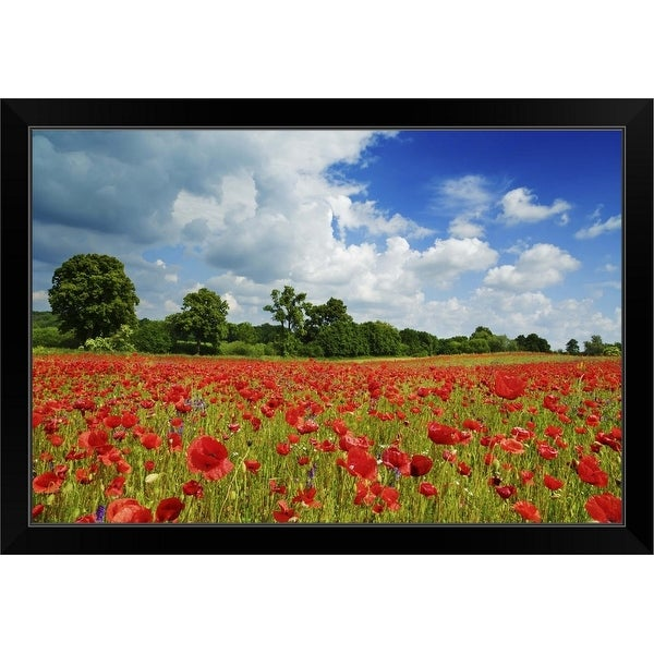 """Corn Poppies in Meadow"" Black Framed Print"