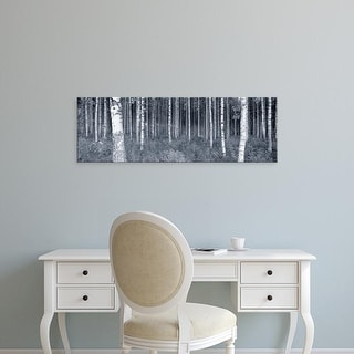 Easy Art Prints Panoramic Images's 'Birch Trees In A Forest, Finland' Premium Canvas Art