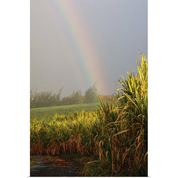 """""""Rainbow arching into field behind stream, Hawaii"""" Poster Print"""