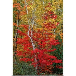 """""""Forest in autumn"""" Poster Print"""