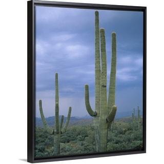 Art print POSTER CANVAS Flowering Hedgehog Cacti in the Sonoran Desert