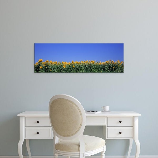 Easy Art Prints Panoramic Image 'View Of Blossoms In A Sunflower Field, Marion County, Illinois, USA' Canvas Art