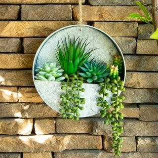 """Link to Succulent in 8"""" Hanging Galvanised Tin Wall Planter - ONE-SIZE Similar Items in Decorative Accessories"""