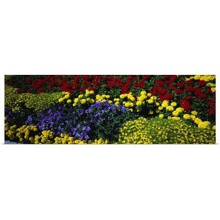 """""""Colorful annual flowers in bloom, close-up"""" Poster Print"""