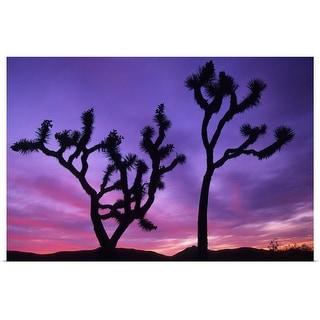 """Joshua Trees at sunset"" Poster Print"