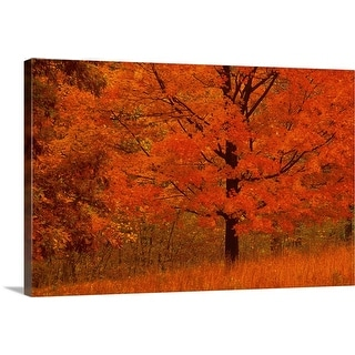 """Autumn tree with red foliage"" Canvas Wall Art"