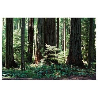 """""""Old growth coniferous forest in Canada"""" Poster Print"""