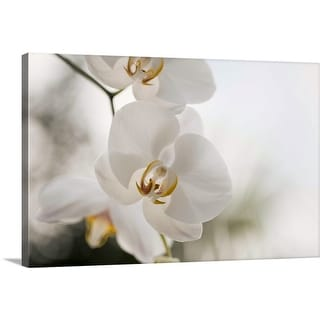 """White orchid"" Canvas Wall Art"