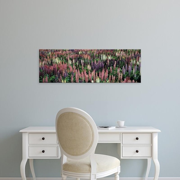 Easy Art Prints Panoramic Images's 'Lupine Field' Premium Canvas Art