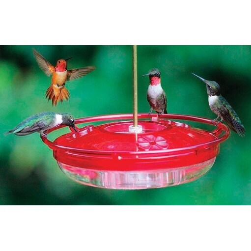 Shop Cole's HH03 Hummingbird Covered Tray Bird Feeder, Polycarbonate, 8 Oz - Free Shipping On ...