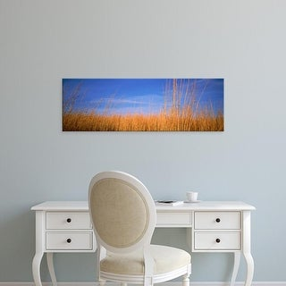 Easy Art Prints Panoramic Images's 'Grass in a field, Marion County, Illinois, USA' Premium Canvas Art