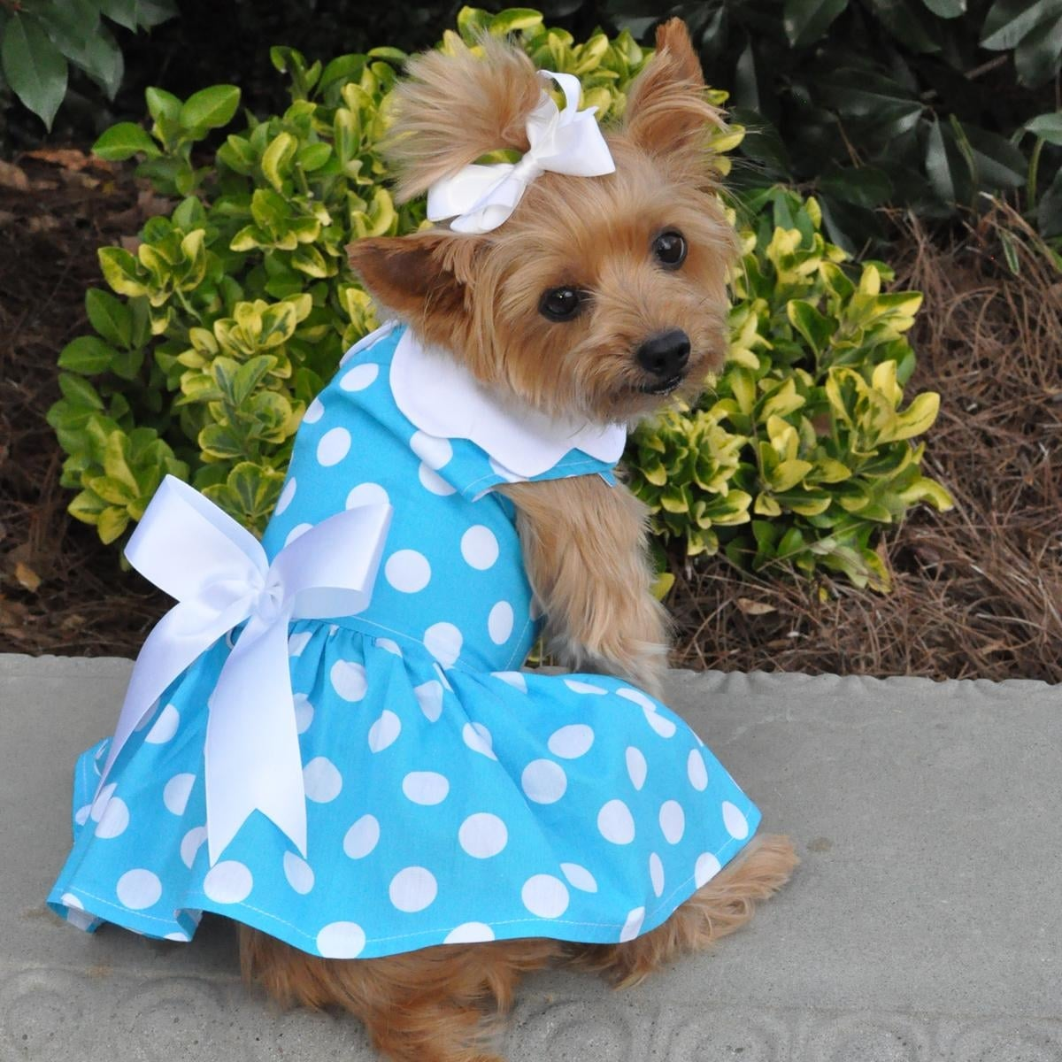 Blue Polka Dot Dog Dress with Matching Leash by Doggie Design (X-Small)