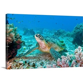 """Green turtle at Balicasag, Bohol, Philippines."" Canvas Wall Art"