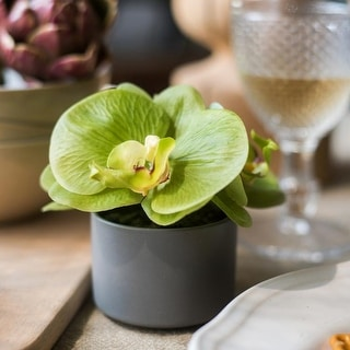 RusticReach Mini Real Touch Potted Orchid in Green