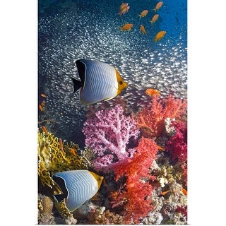 """""""Butterflyfish over coral reef"""" Poster Print"""