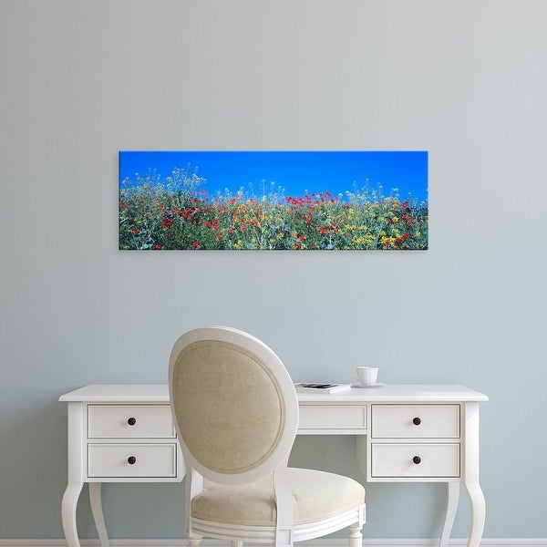 Easy Art Prints Panoramic Images's 'Poppy field Tableland N Germany' Premium Canvas Art