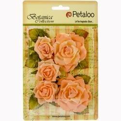 """Peach - Botanica Garden Roses 1.5"""" To 2.5"""" 5/Pkg"""