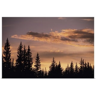 """""""Pine trees at sunset"""" Poster Print"""