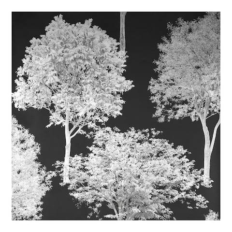 Tree Tops Black Photographic Wallpaper - 20.5 x 396 x 0.025