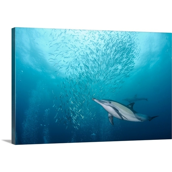 shop premium thick wrap canvas entitled dolphin and small sardine