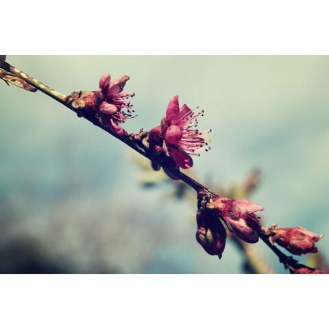 Flowers Photograph Unframed Fine Art Print