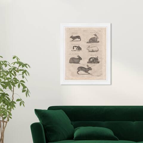 Wynwood Studio 'Lepus Rabbits' Animals Black Wall Art Framed Print