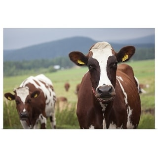 """""""Grazing cows"""" Poster Print"""
