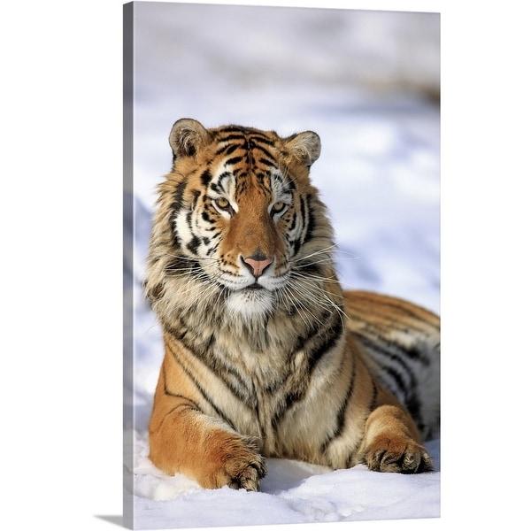 Shop Premium Thick-Wrap Canvas Entitled Siberian Tiger