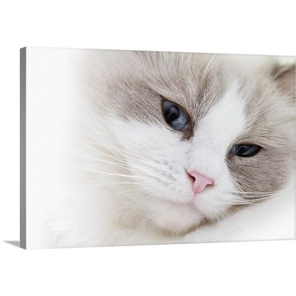 Shop Premium Thick Wrap Canvas Entitled Ragdoll Cat