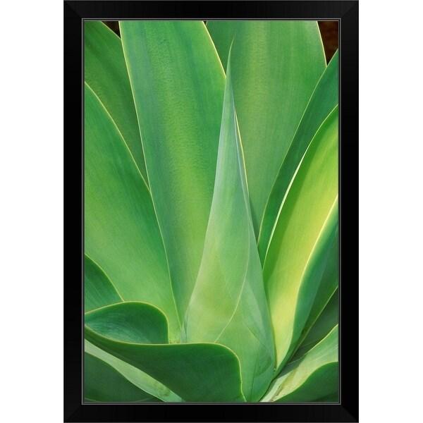 """Cactus, southern California"" Black Framed Print"